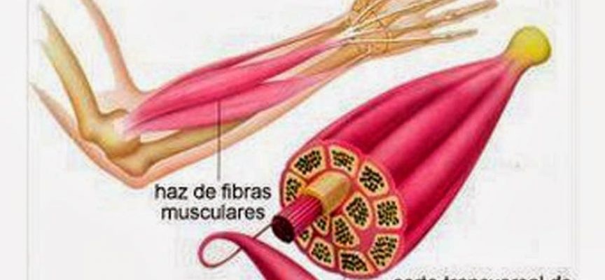 Calambres musculares